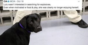 Internet Can't Stop Loving This Dog Who Refused To Keep Working For CIA