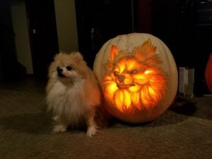 This Dad Carved A Dog Lantern That Looks Exactly His Pomeranian & It Looks Pawsome