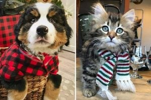 10+ Doggos and Cattos Who Are All Dressed Up And Ready For Christmas