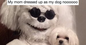 23 Dog Tweets That Are Never Not Funny
