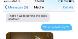 The Things This Mom Finds Out About Her Home Alone Dogs Will Forever Change What You Imagine About Yours