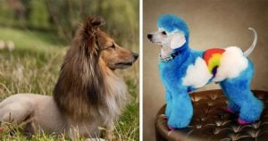 10+ Photos Of Doggos With Ridiculously Hilarious Haircuts
