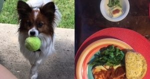This Mom Makes Mini Version Of Their Family Dinner For Their Dog & Internet Can't Handle It