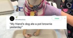 Doggo Ate A Pot Brownie, Now He Is Blazed AF And Made The Most Hilarious Face Ever