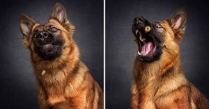 Photographer Captured Images Of Doggos Grabbing Treats Is The Only Thing You Need Today