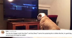 This Bulldog's Adorably Cute Reaction to a Horror Movie is Going Viral All Over the Internet