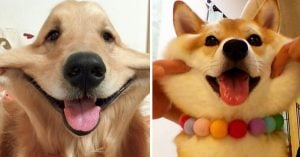 10 Irresistible Doggos With the Most Squeezable Cheeks Ever!