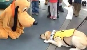 This Dog Met His Idol Pluto in Disney Land And You Can't Miss Watching His Reaction.