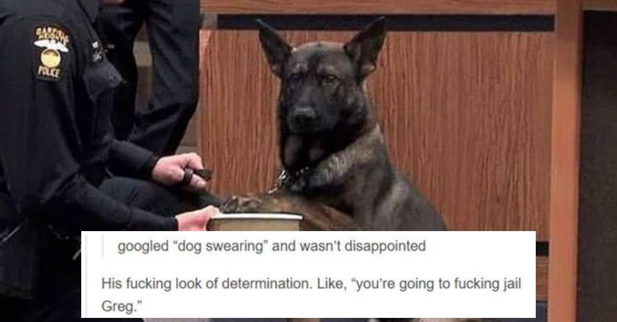 10 tumblr posts that prove dogs are dominating the internet