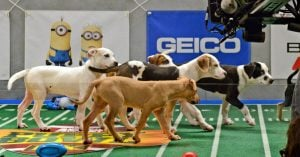 Here's How You Can Watch Puppy Bowl 2018 Live And Cheer For All The Good Bois