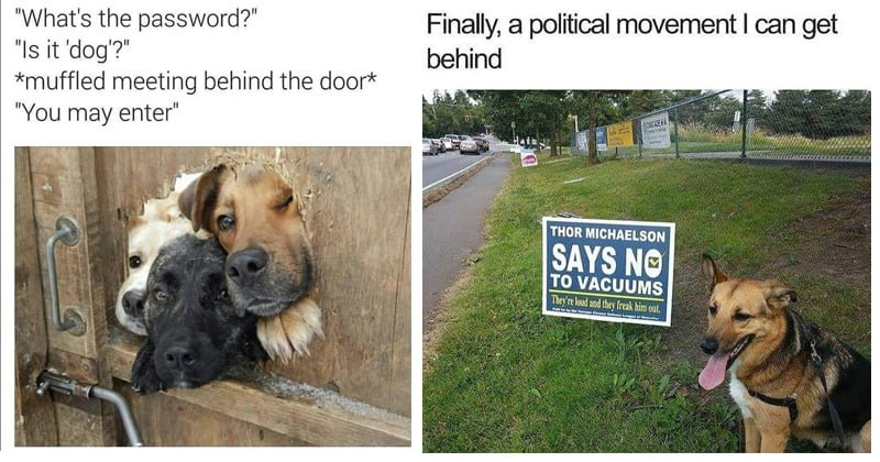 download 1 10 doggo memes that'll instantly cheer you up