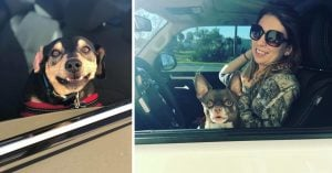 Bagel Shop Employee Takes Pictures Of  Doggos That Come To Her Drive-Thru & Their Faces Are The Purest Thing