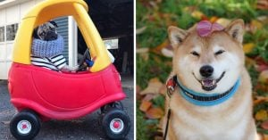 10 Most Famous Instagram Pets Who Are Living A Way Better Life Than Yours