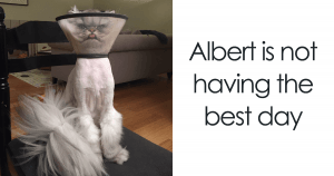 10+ Pets Who Came Back From The Vet Really High And Their Face Says It All