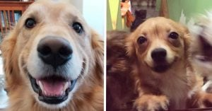 15+ Pictures of Doggos Smiling That'll Make You Smile Back