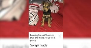When someone tried to trade this puppy for an iPhone, social media actually came to the rescue for once
