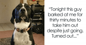 35+ Stories of Bravery and Valor that Show that Doggos are the Real Heroes