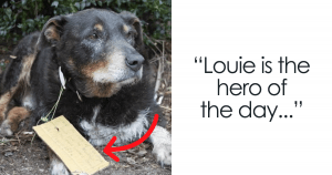 Elderly Dog To The Unexpected Rescue