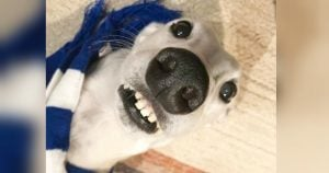 This White Greyhound Has A Pure Heart Filled With Love And She Deserves Every Bit Of Attention
