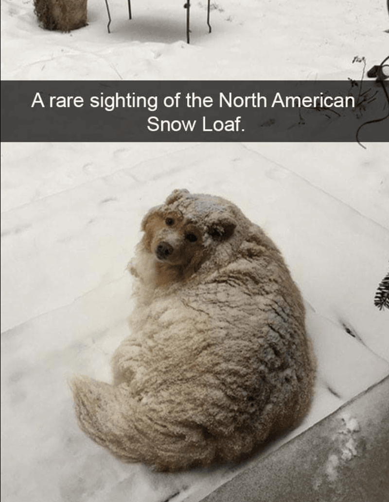 snow loaf 10 doggo memes that'll instantly cheer you up