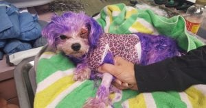 Little Doggo Almost Dies From Hair Dye