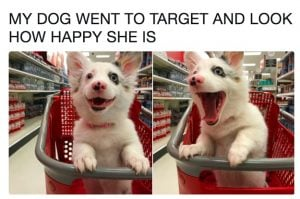 10+ Tweets About Awesome Doggos