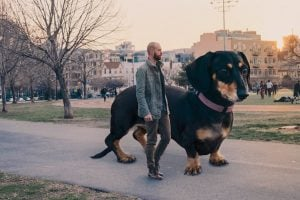 Guy Photoshops His Tiny Dog to 6ft Tall and It Doesn't Look So Weird After a While