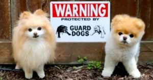 10+ Most 'Ferocious' Dogs Behind 'Beware Of Dog' Signs That Will Scare Your Soul