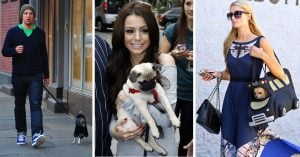 10+ Cutest Celebrity Dogs Of All-Time That Who Are The Good-est Boy Ever