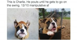 10+ Doggos Who Were Rated 12/10 For All The Right Reasons