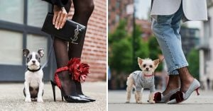 These Puppers Are The High Fashion Models And They Are All Too Professional And Cute To Handle