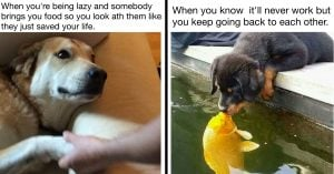 10+ Doggo Memes That Perfectly Depicts Your Love Life