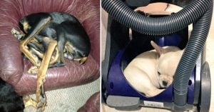 10+ Doggos Who Will Sleep Wherever They Fucking Want To