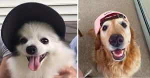 10+ Doggos Wearing Hats To Put A Smile On Your Face If You're Having A Ruff Day