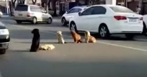 Four Doggos Held A Vigil For Their Friend Who Was Struck By A Car And It'll Leave You In Tears