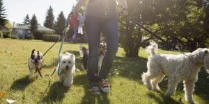 10+ Things You Should Know Before You Became A Dog Walker