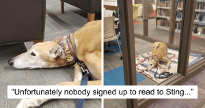 Nobody Showed Up To Read To A Retired Greyhound Racer So The Internet Intervined