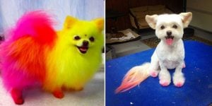 10+ Things You Should Know Before You Become A Dog Groomer Or Take Your Doggo To A Groomer