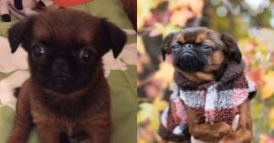 People Shared Their Puppers Transformations To Doggos And We're Living For It