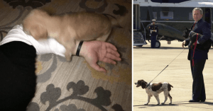10+ Situations You'll Only Understand If You Are Hooman Of A Smol Doggo