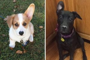 10+ Cute Woofers Who Can Only Lift One Ear But It's Enough To Make Your Day