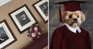 This Doggo Got His Own Graduation Picture By His Sisters And Its Adorable AF