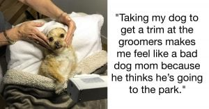 13 Hilariously Relatable Dog Grooming Struggles