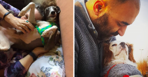 Top Ten Most Snuggliest Dog Breeds That You Need To Go Cuddle Right Now