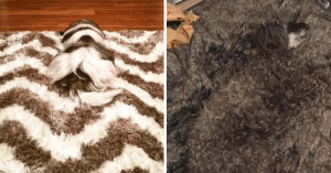 10+ Doggos Who Are Masters Of Camouflage And It Will Take You To Look Twice To Spot Them