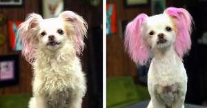 10+ Doggy Glow-Ups That Prove How Grooming Can Transform Your Doggo