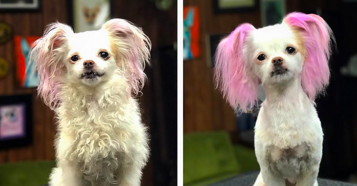 10 Doggy Glow Ups That Prove How Grooming Can Transform Your Doggo