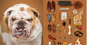 Photographer Takes Amazing Portraits Of Dogs With Specific Objects That Represent Their Inner Selves