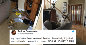 10+ Tweets About Doggos Doing Doggo Stuff Will Make Your Ruff Day Better