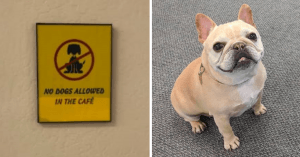 Internet Is Obsessed With This Doggo Who Waits Patiently Outside A Kitchen He's Not Allowed In